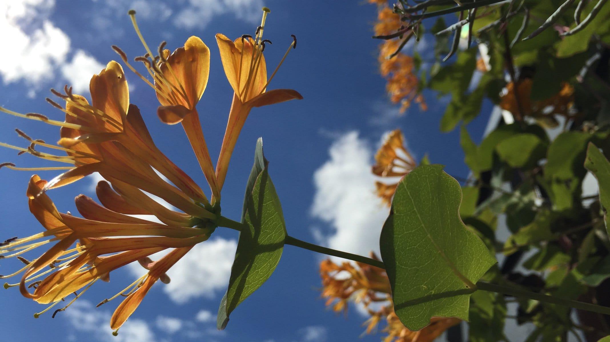 Blüte vor Himmel