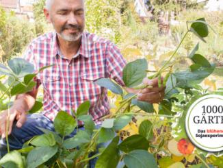 Dr. Volker Hahn forscht an Soja aus heimischem Anbau.